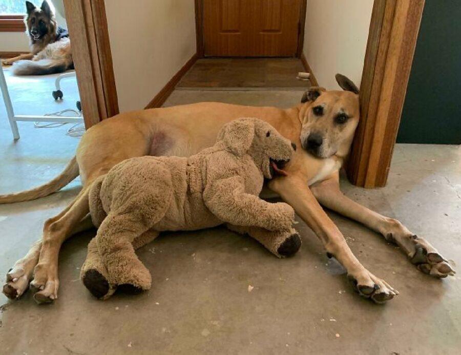 cane con altro cucciolo pupazzo