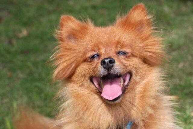 cane simpatico sorriso
