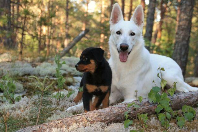 cani coppia dolci
