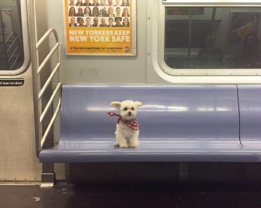 cagnolino seduto sulla metro