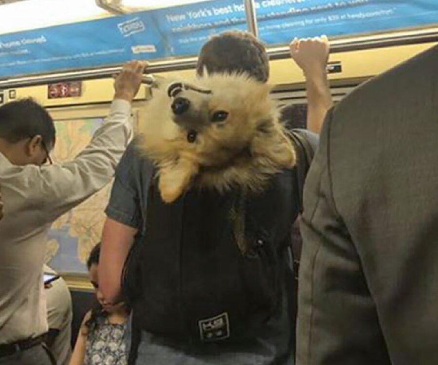 cane insieme proprietario su metro