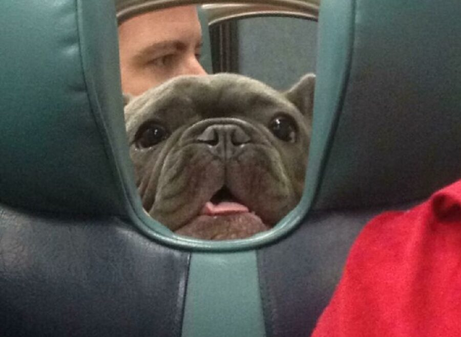 cane osserva da buco sedili
