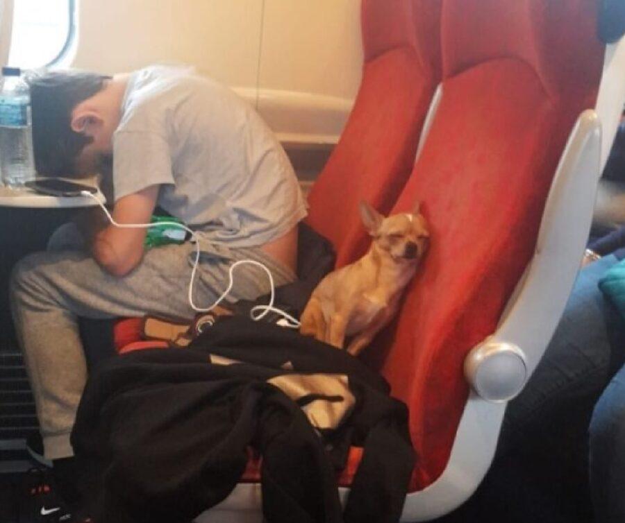 cucciolo dorme posto treno