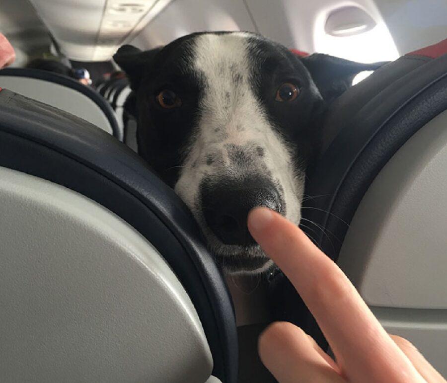 cane uomo tocca naso