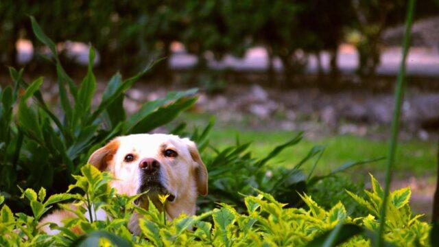 cucciolo natura foglie