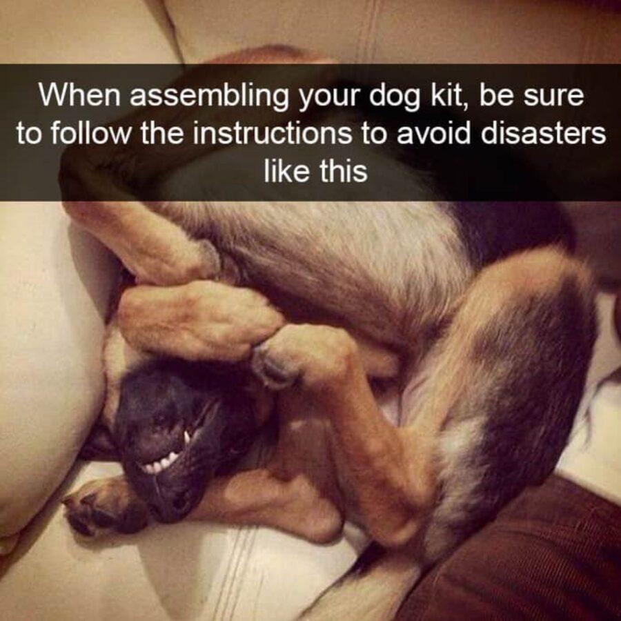 cane sottosopra buffo