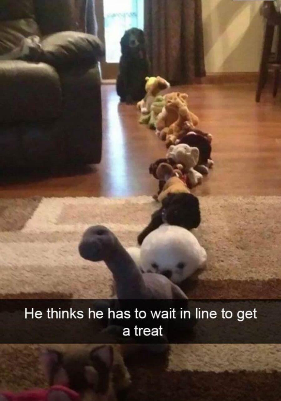 cane in fila