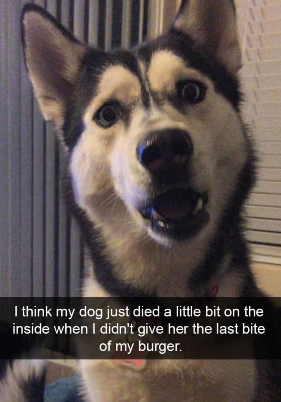 cane faccia sorpresa