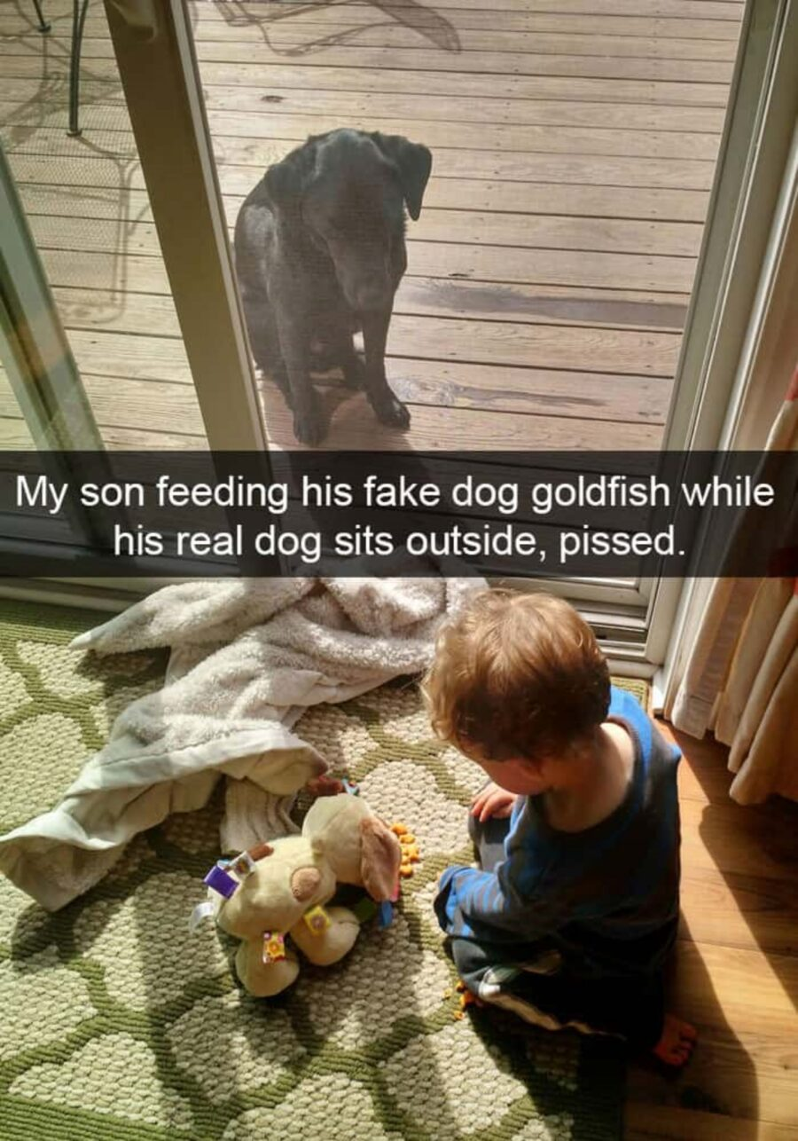 bimbo gioca cane