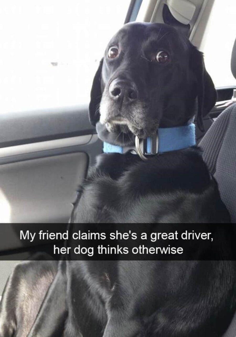 simpatico cane espressione