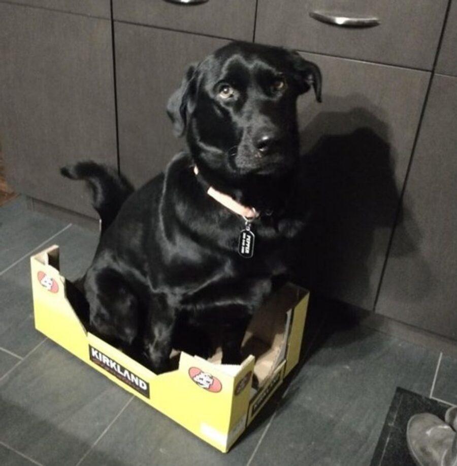 cane cartoncino scatola