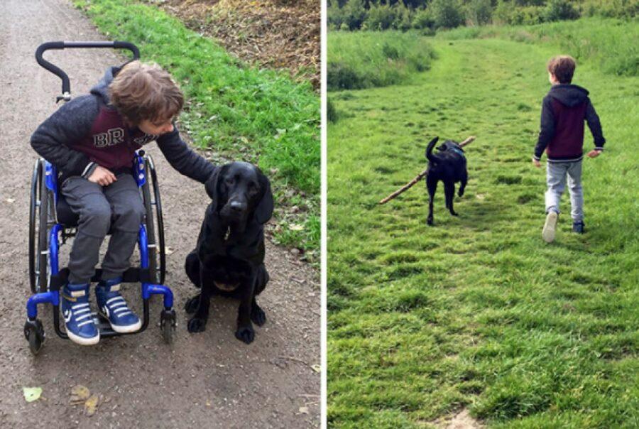 cane insieme fratello sedia a rotelle