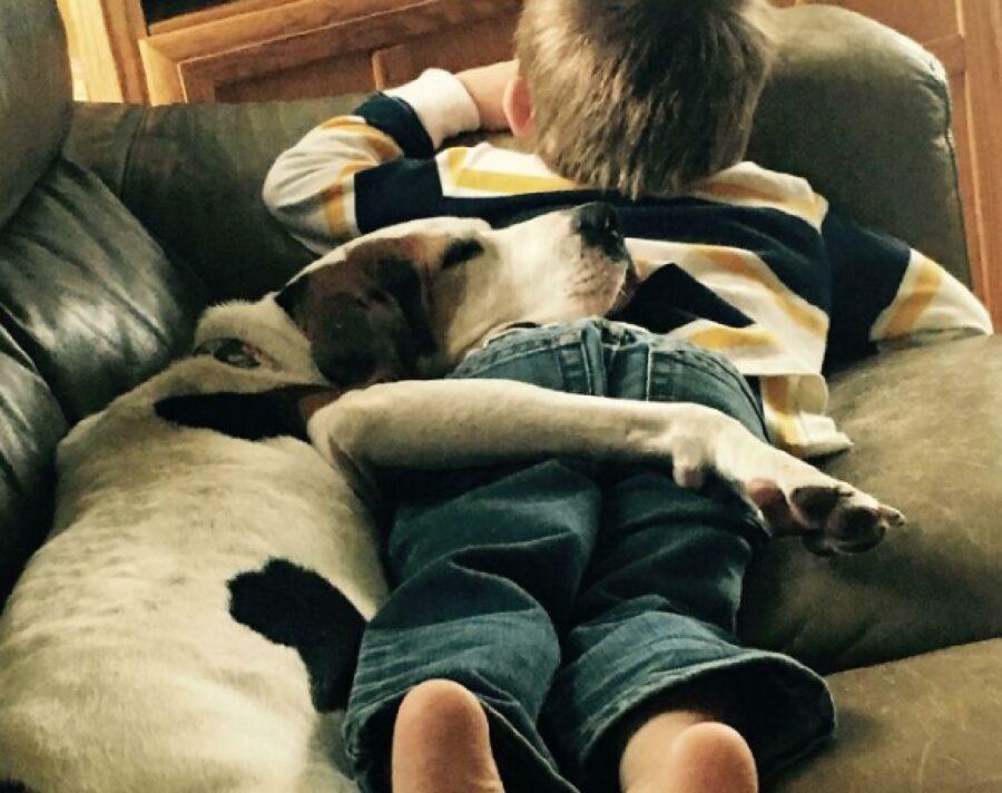 cagnolino disteso su divano