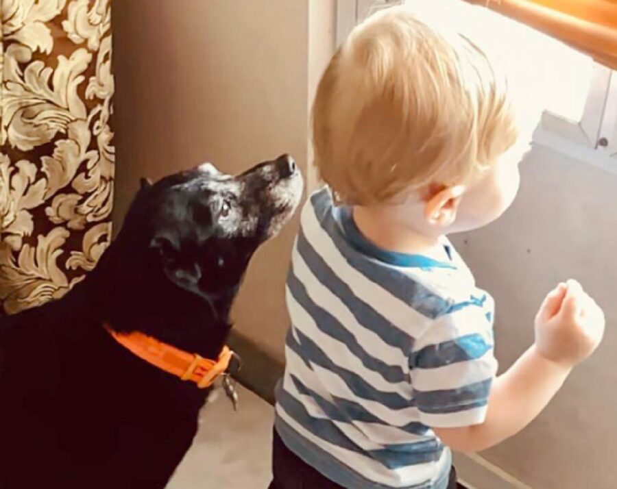 cane ragazzino affacciati da finestra