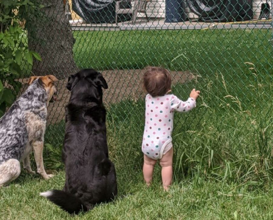 coppia cani bambina giardino