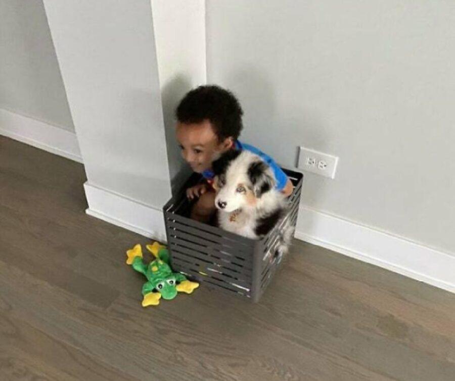 cane insieme bambino angolo casa