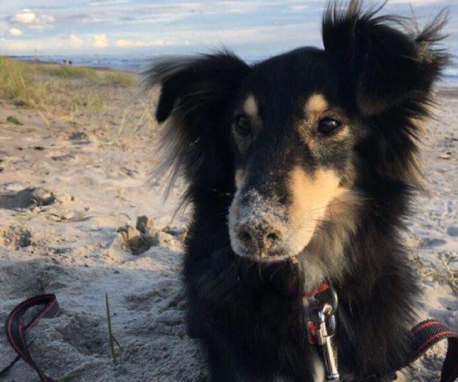 cane naso insabbiato completo