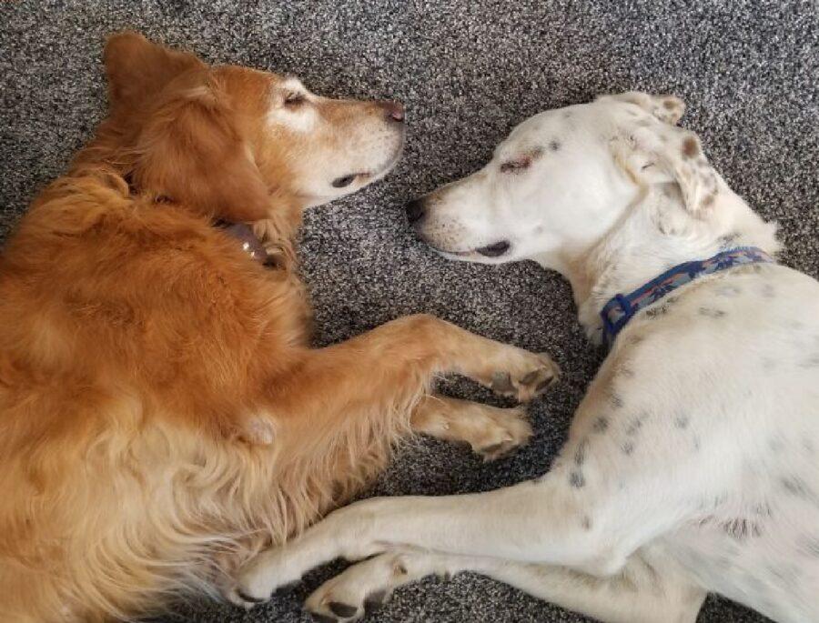 cane bianco assieme cane marrone
