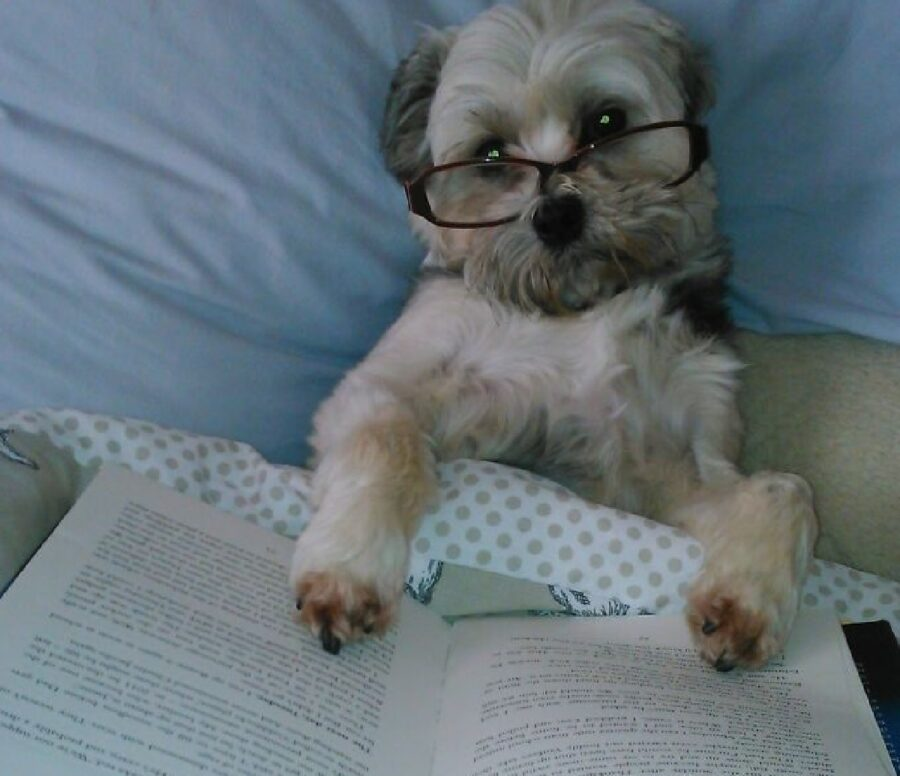 cagnolino con occhiali sul viso
