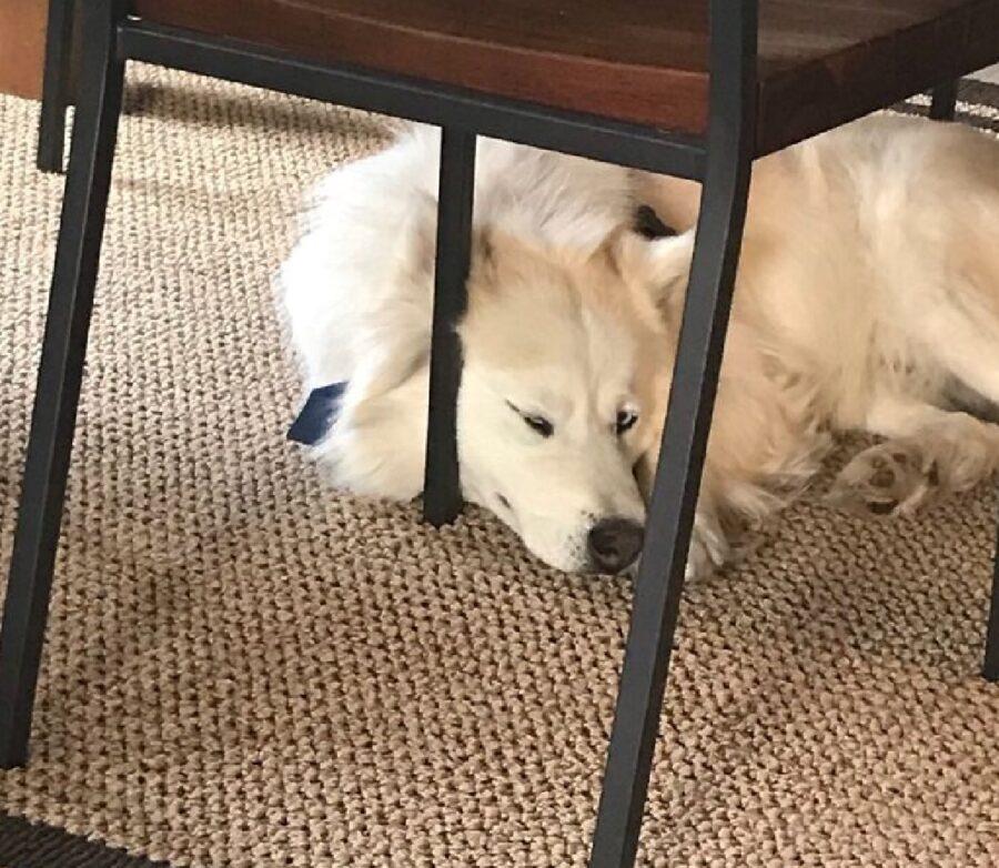 cane bianco cerca appoggio