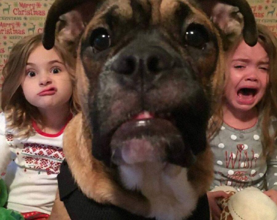 cane foto primo piano