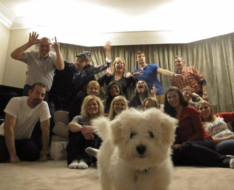 cagnolino bianco primo piano