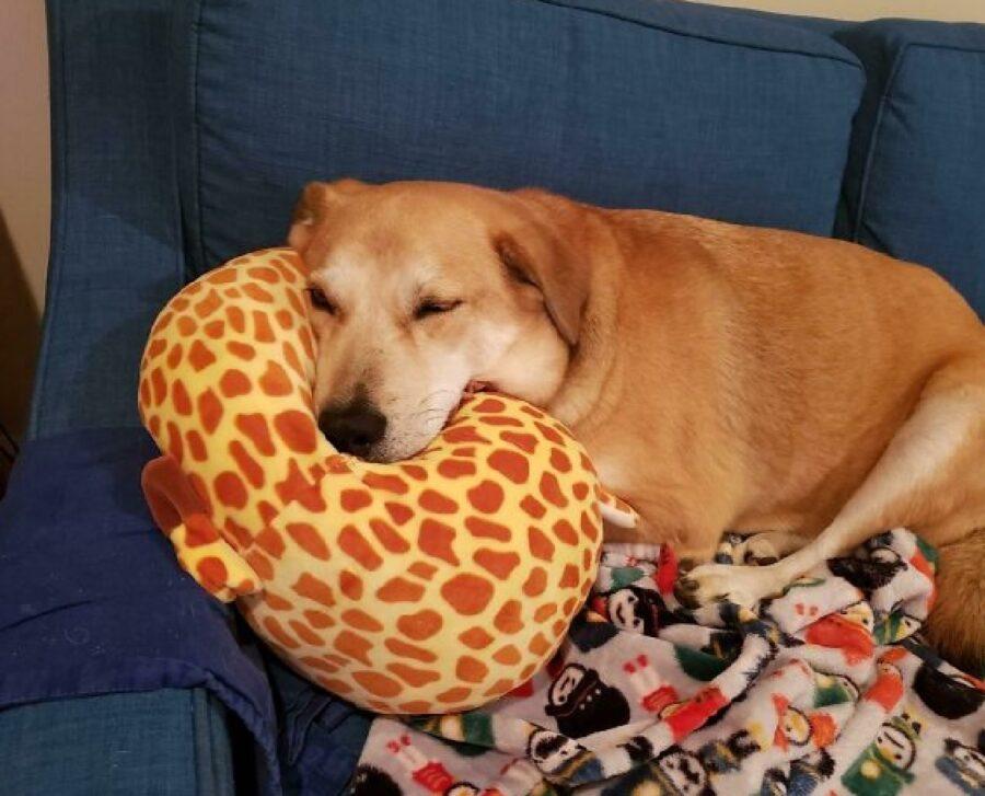 cane con cuscino giraffa