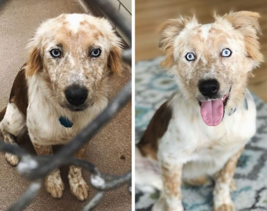 cane tenero evoluzione