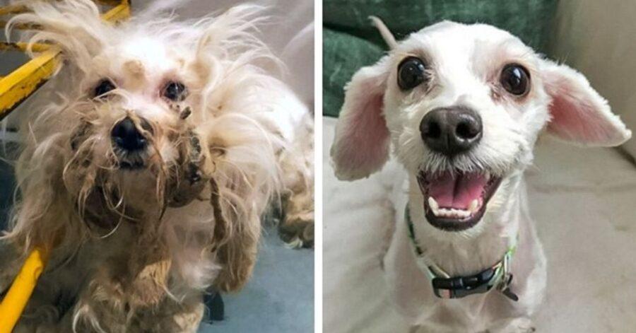 gioia cagnolino bianco