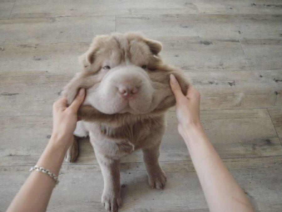 cane coccole guance elastiche