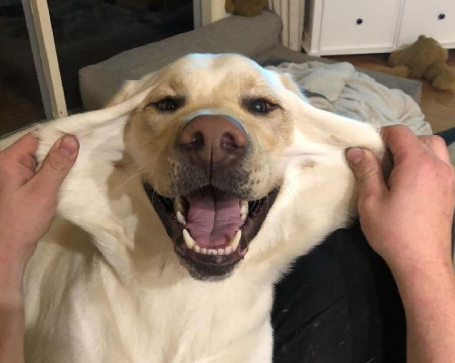 cane felice di potersi allungare