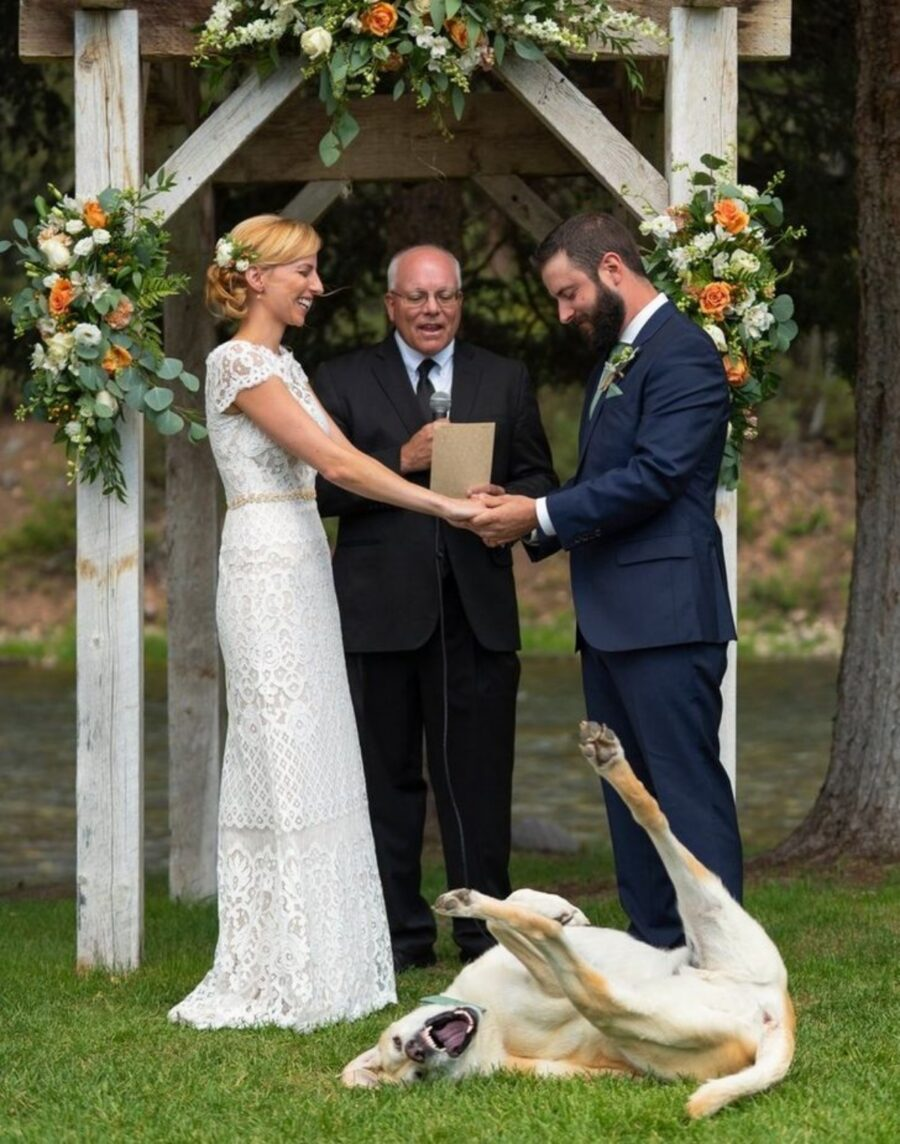 matrimonio sposi cane