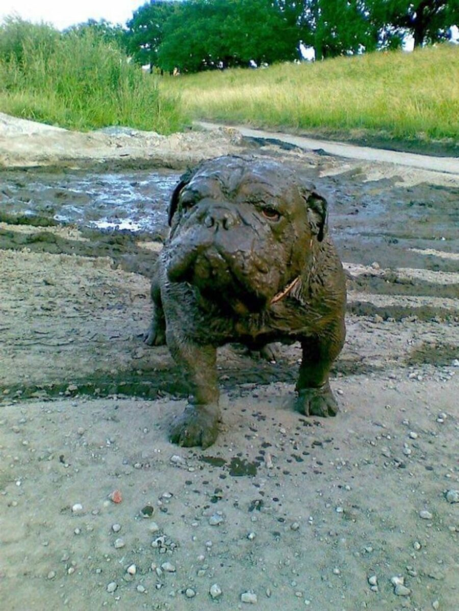 cucciolo fango sporco