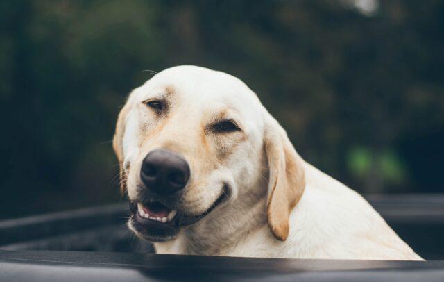 cane felice dolce