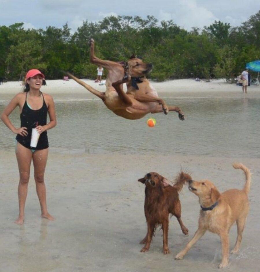 cane salto epico