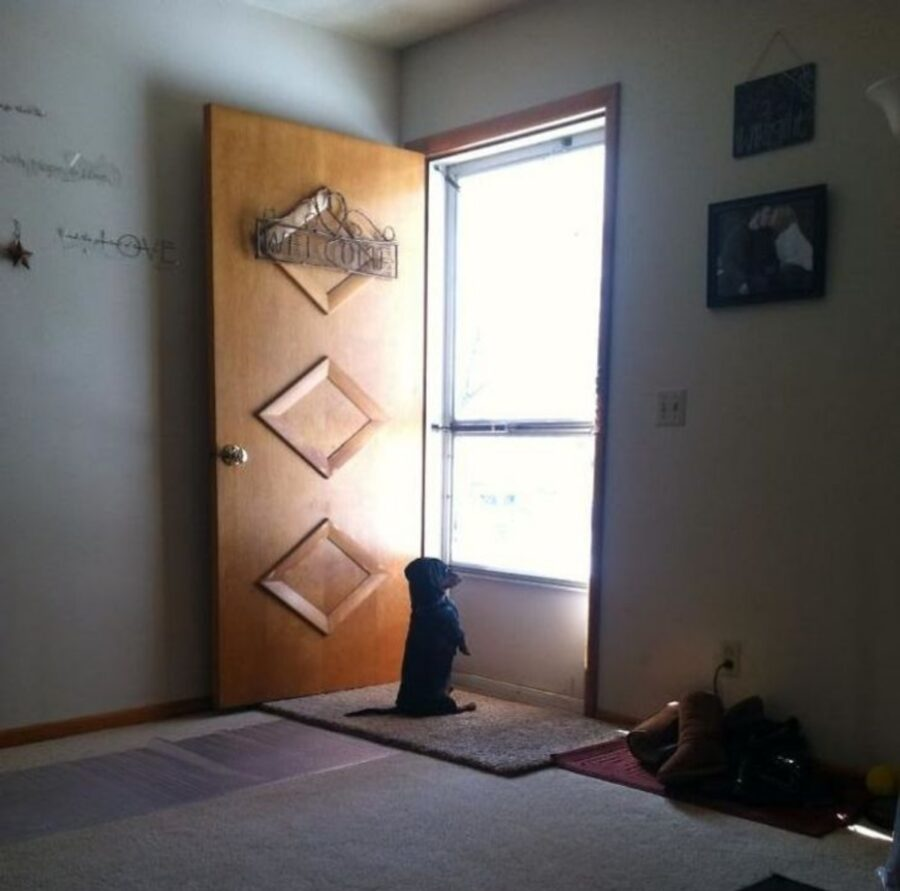 cane aspetta porta