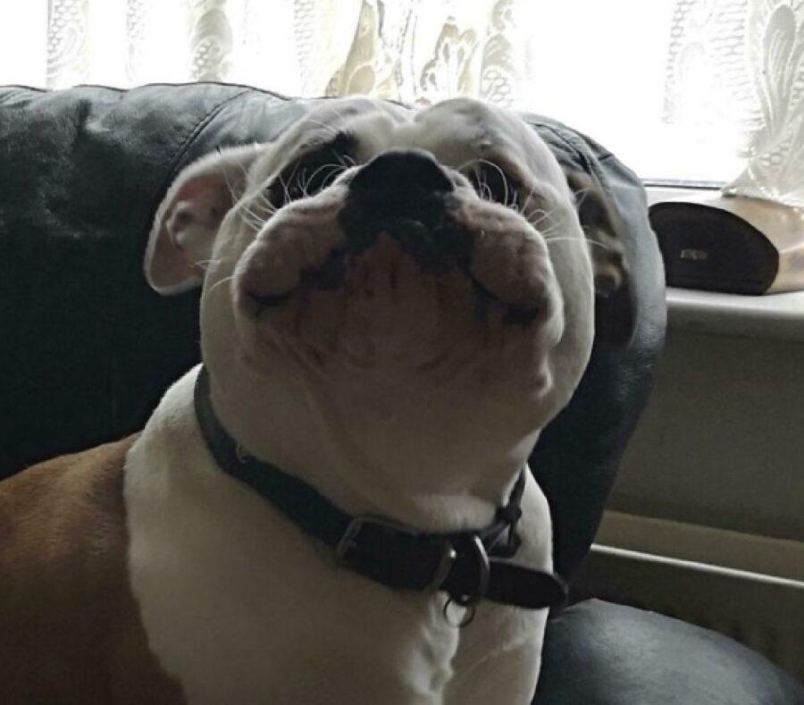 cane mostra muso espressione