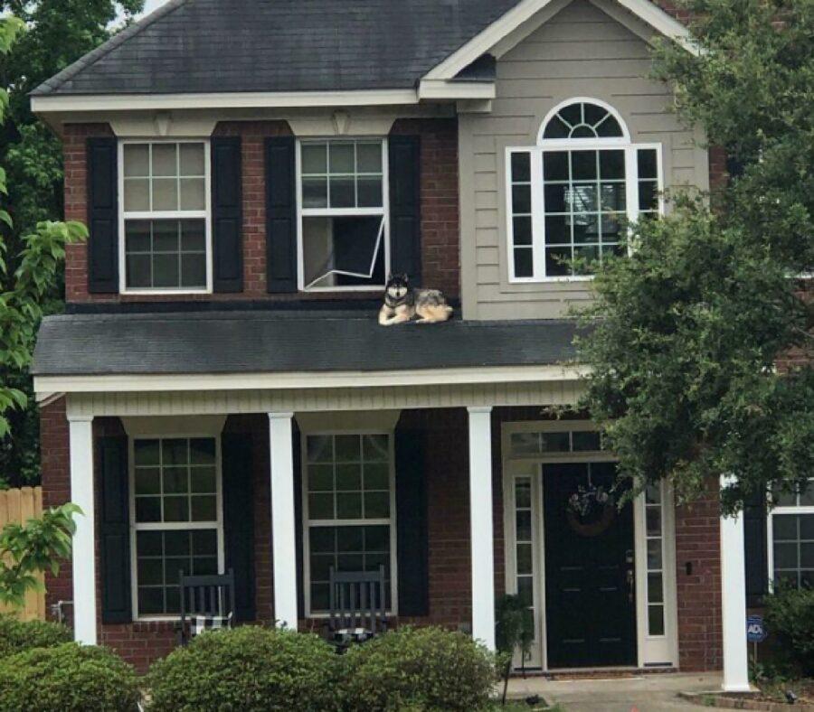 cane esce da finestra casa