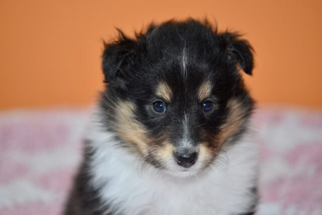 cucciolotto dolce adorabile