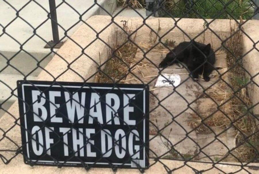 gatto cane posto