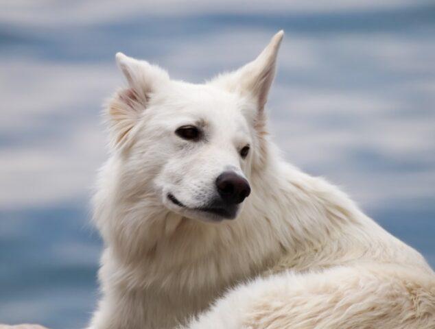cani che non sanno rimanere senza fare la spia