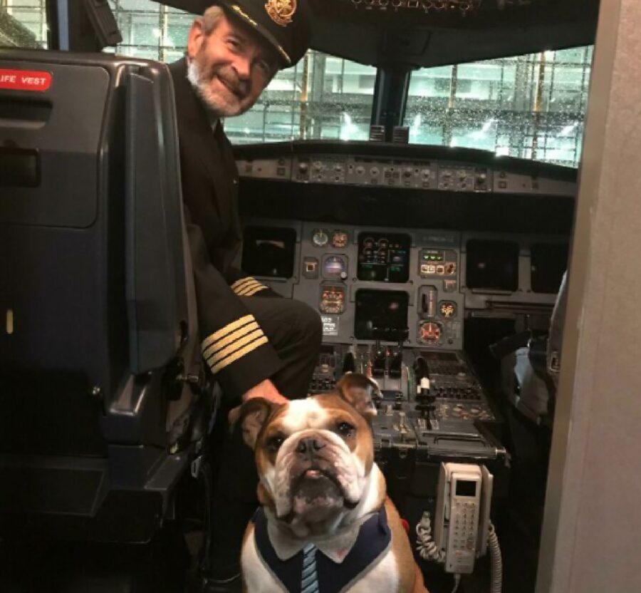 cagnolino bulldog su aereo