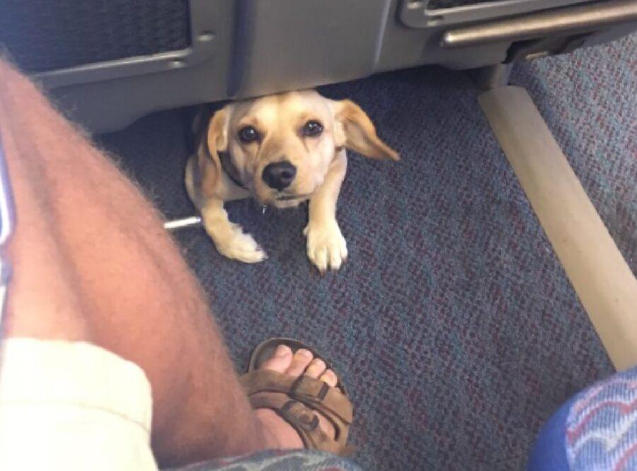 cagnolino sotto sedili treno
