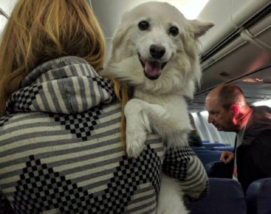 cane bianco in braccio mamma