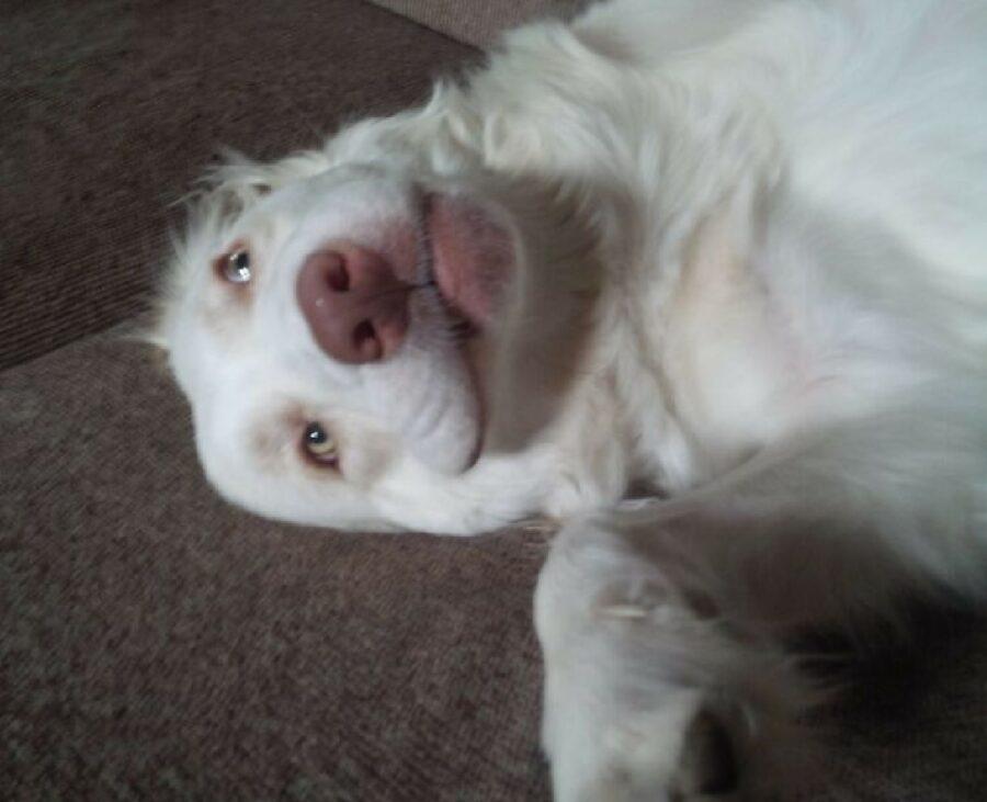 cane sorriso bianco sincero