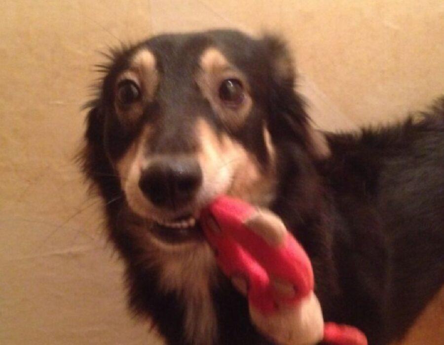 cane con giocattolo fra denti