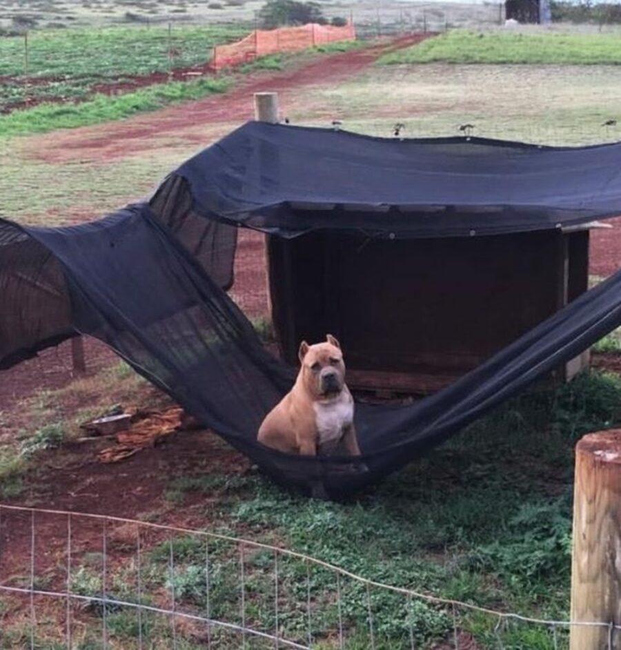 cane sopra rete
