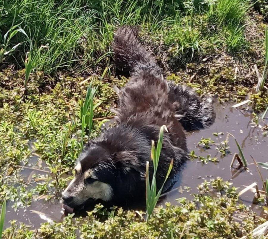 cane acqua bagnato