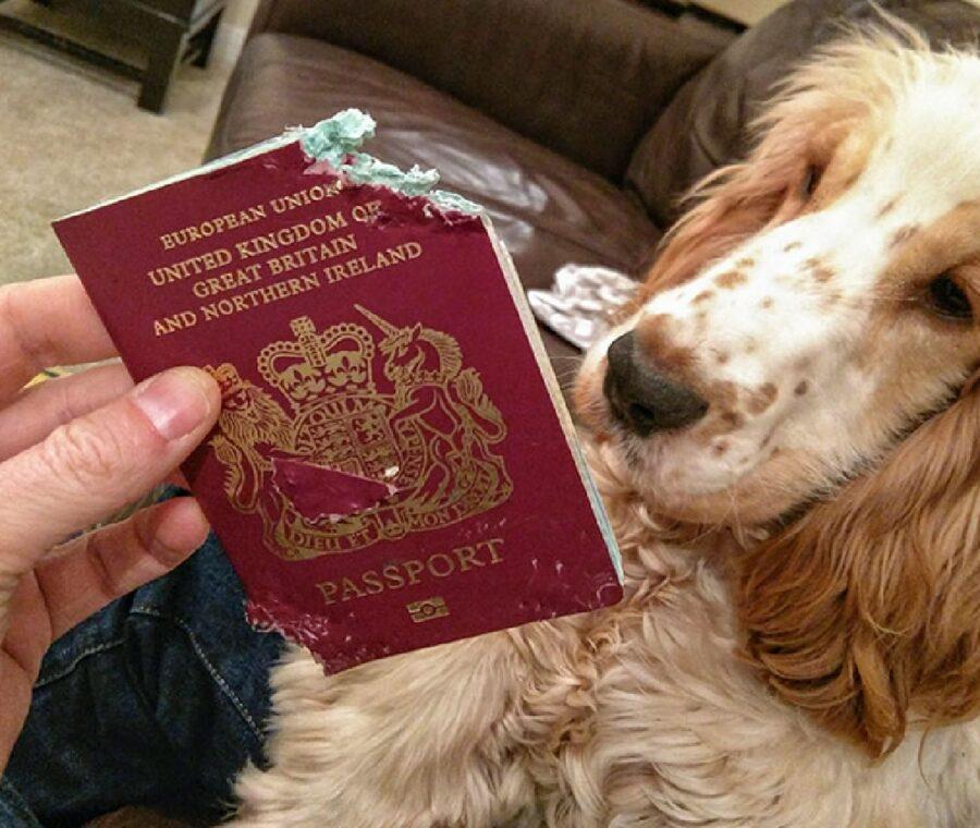 cane strappa passaporto a morsi
