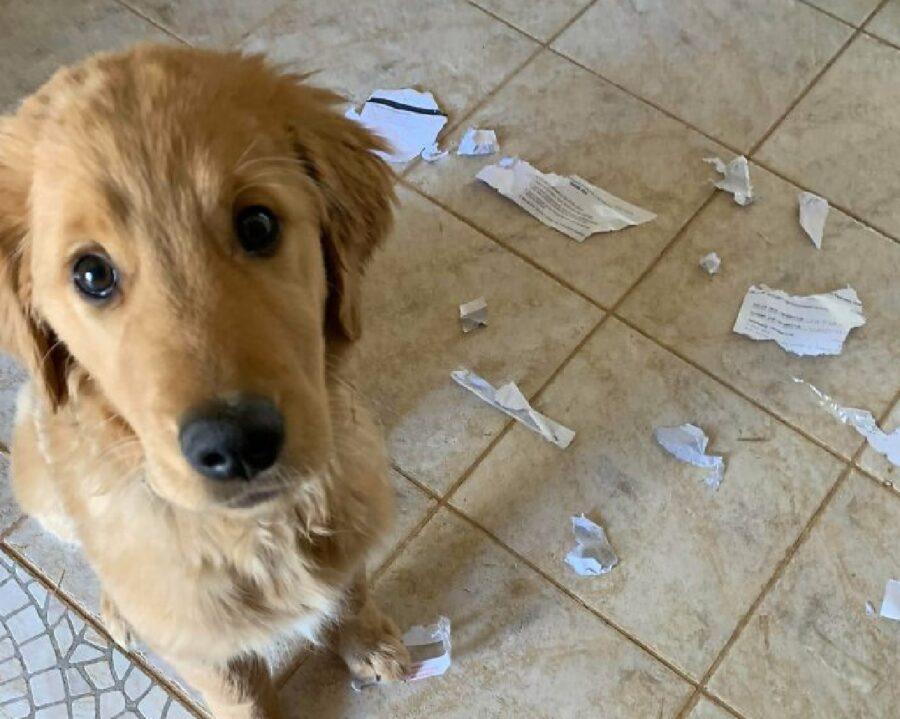 cane strappa bollette per terra